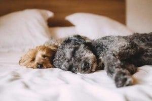 Auch unsere Haustiere wissen gute Schlafmöbel zu schätzen.